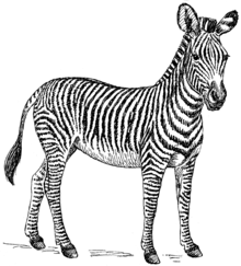 Zebra_(PSF)